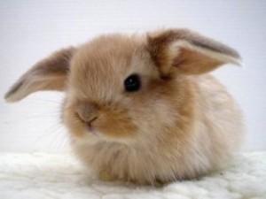 Домашние животные – кролики