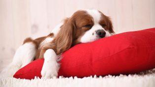 где должен спать щенок в квартире